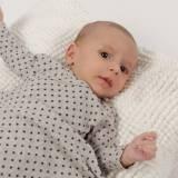Primera puesta Black Star Beltin newborn